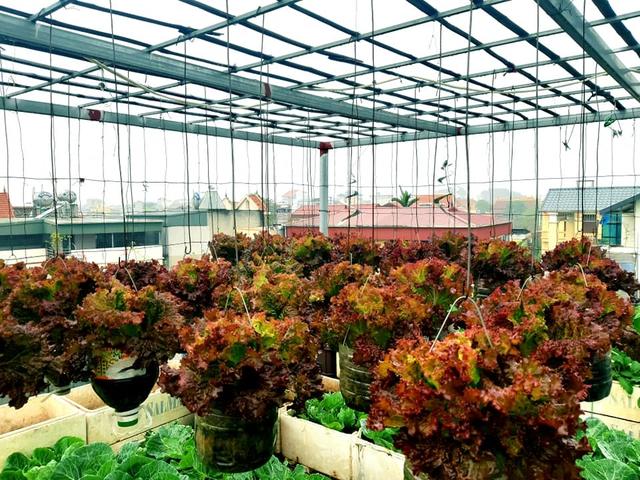 Khu vườn trên sân thượng đầy ắp rau quả xanh mướt ngay ở Hà Nội khiến ai cũng ước ao: Mùa nào thức nấy, rau xanh quả ngọt lại đảm bảo sạch sẽ! - Ảnh 14.