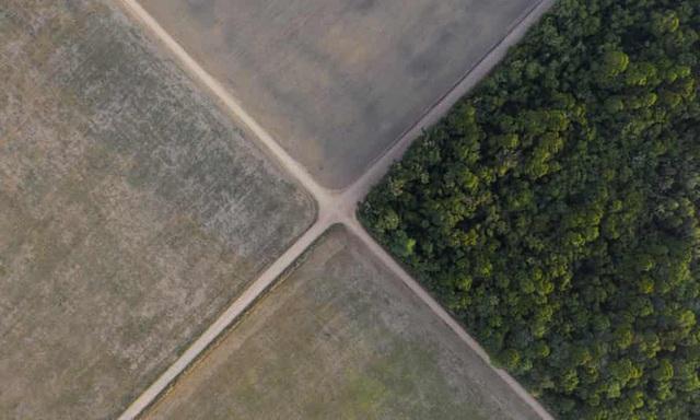 Chỉ với 4 thập kỷ khai phá, con người đã chấm dứt 55 triệu năm hấp thụ carbon của rừng Amazon - Ảnh 2.