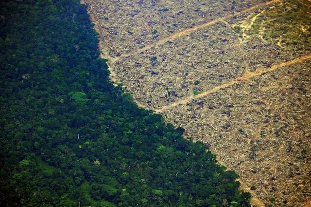 Chỉ với 4 thập kỷ khai phá, con người đã chấm dứt 55 triệu năm hấp thụ carbon của rừng Amazon - Ảnh 4.