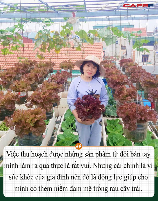 Khu vườn trên sân thượng đầy ắp rau quả xanh mướt ngay ở Hà Nội khiến ai cũng ước ao: Mùa nào thức nấy, rau xanh quả ngọt lại đảm bảo sạch sẽ! - Ảnh 20.
