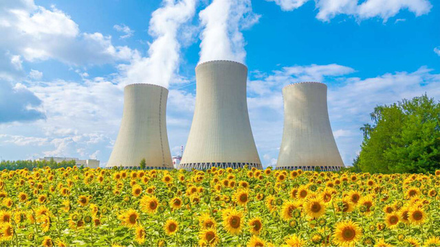 Tại sao các nhà khoa học trồng hoa hướng dương sau thảm họa hạt nhân? - Ảnh 1.