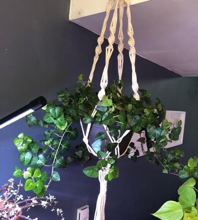8 loại cây cảnh có thể giúp cân bằng độ ẩm không khí trong nhà của bạn - Ảnh 1.
