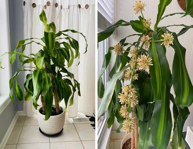 8 loại cây cảnh có thể giúp cân bằng độ ẩm không khí trong nhà của bạn - Ảnh 8.