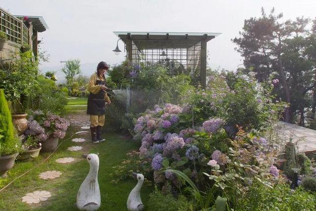 Người phụ nữ bỏ phố về quê để xây dựng vườn hoa 1500m2 đẹp nhất Trung Quốc: Nửa đời người dành cho gia đình, nửa đời sau, hãy dành cho chính mình - Ảnh 3.