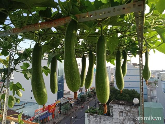 Vườn sân thượng đủ loại từ bầu bí đến nho của bố đảm Sài Gòn giúp gia đình an toàn ở nhà chống dịch - Ảnh 2.