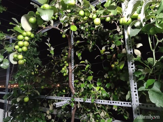 Vườn sân thượng đủ loại từ bầu bí đến nho của bố đảm Sài Gòn giúp gia đình an toàn ở nhà chống dịch - Ảnh 7.