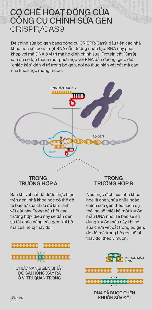 Làm sao để nâng cấp một trái tim? Hãy cấy DNA từ những nhà vô địch Olympic - Ảnh 13.