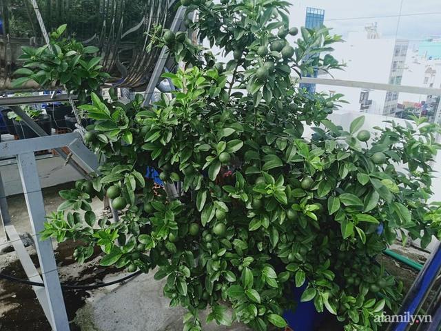 Vườn sân thượng đủ loại từ bầu bí đến nho của bố đảm Sài Gòn giúp gia đình an toàn ở nhà chống dịch - Ảnh 8.