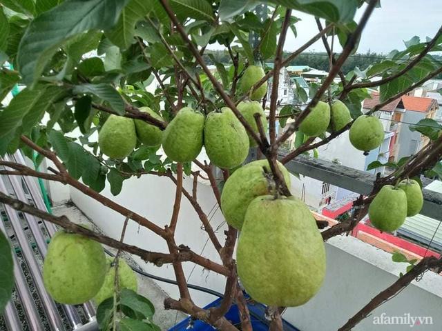 Vườn sân thượng đủ loại từ bầu bí đến nho của bố đảm Sài Gòn giúp gia đình an toàn ở nhà chống dịch - Ảnh 9.