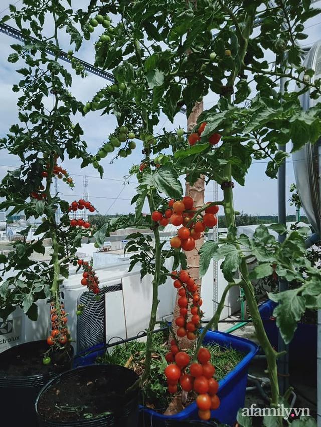Vườn sân thượng đủ loại từ bầu bí đến nho của bố đảm Sài Gòn giúp gia đình an toàn ở nhà chống dịch - Ảnh 12.