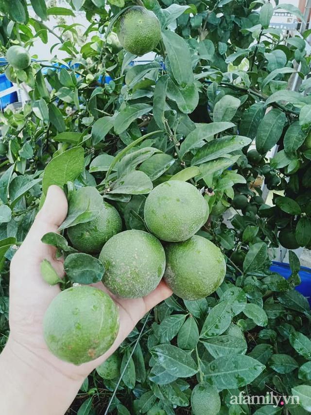 Vườn sân thượng đủ loại từ bầu bí đến nho của bố đảm Sài Gòn giúp gia đình an toàn ở nhà chống dịch - Ảnh 14.