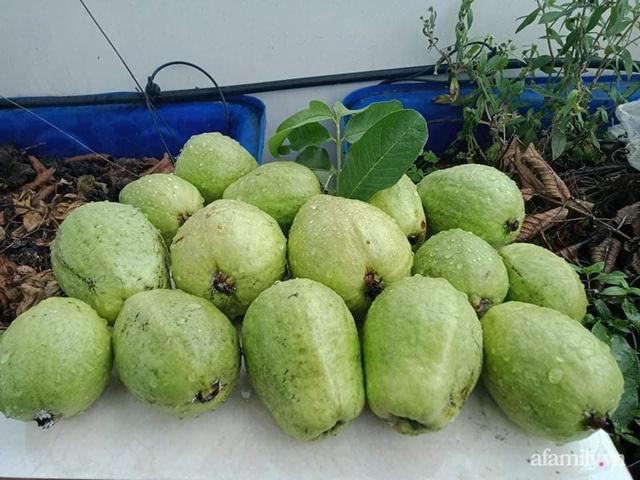 Vườn sân thượng đủ loại từ bầu bí đến nho của bố đảm Sài Gòn giúp gia đình an toàn ở nhà chống dịch - Ảnh 23.