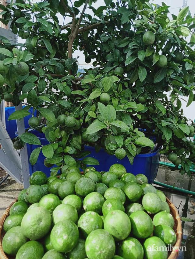 Vườn sân thượng đủ loại từ bầu bí đến nho của bố đảm Sài Gòn giúp gia đình an toàn ở nhà chống dịch - Ảnh 25.