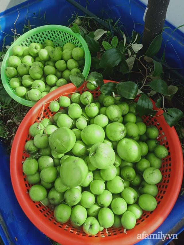 Vườn sân thượng đủ loại từ bầu bí đến nho của bố đảm Sài Gòn giúp gia đình an toàn ở nhà chống dịch - Ảnh 28.