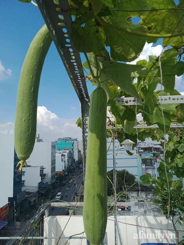 Vườn sân thượng đủ loại từ bầu bí đến nho của bố đảm Sài Gòn giúp gia đình an toàn ở nhà chống dịch - Ảnh 29.