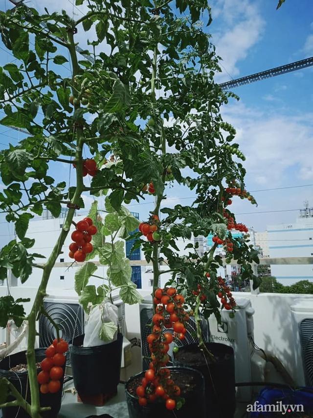 Vườn sân thượng đủ loại từ bầu bí đến nho của bố đảm Sài Gòn giúp gia đình an toàn ở nhà chống dịch - Ảnh 32.