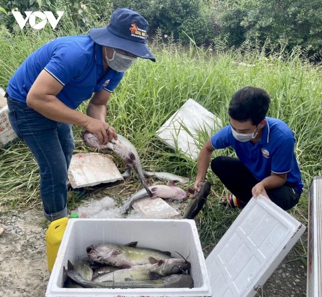 Một nông dân Bạc Liêu tặng 10 tấn cá cho người dân vùng dịch - Ảnh 1.