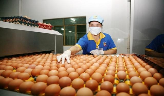 Nguồn cung trứng gia cầm trong dịch bệnh Covid-19 còn rất lớn - Ảnh 1.