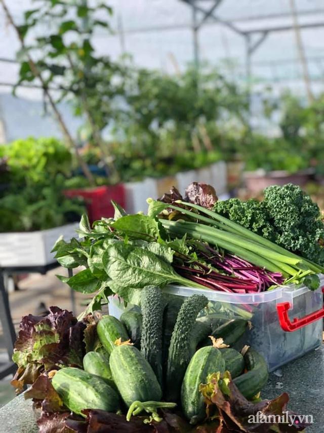 """Mẹ Đà Nẵng tạo ra """"nông trại"""" rau quả sạch trên tầng thượng giúp cả nhà vui khỏe trong những ngày giãn cách - Ảnh 12."""