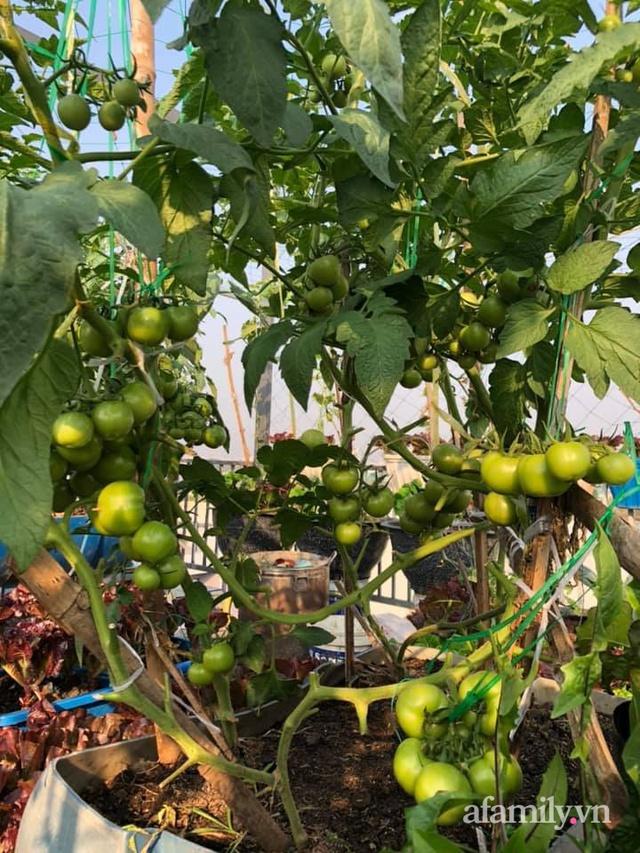 """Mẹ Đà Nẵng tạo ra """"nông trại"""" rau quả sạch trên tầng thượng giúp cả nhà vui khỏe trong những ngày giãn cách - Ảnh 14."""