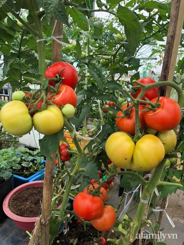"""Mẹ Đà Nẵng tạo ra """"nông trại"""" rau quả sạch trên tầng thượng giúp cả nhà vui khỏe trong những ngày giãn cách - Ảnh 3."""
