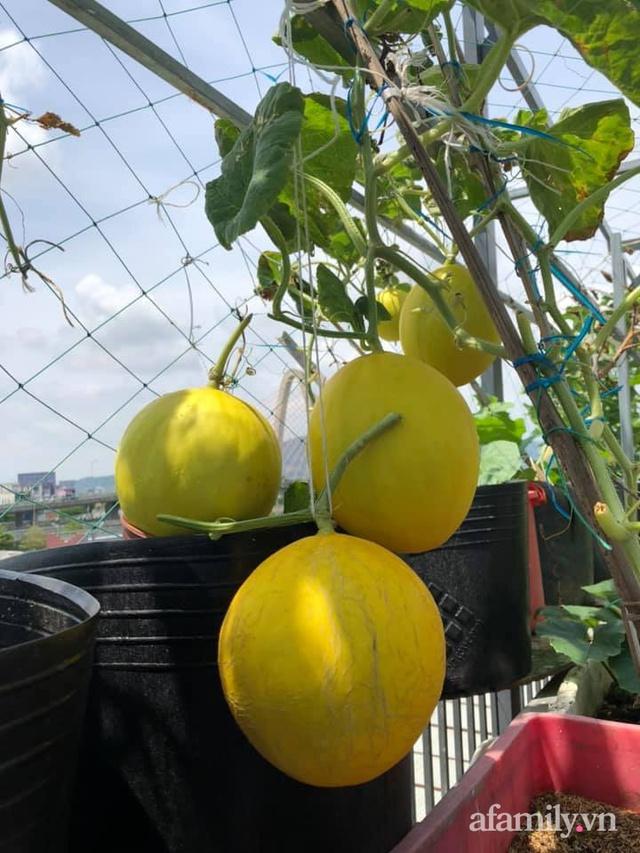 """Mẹ Đà Nẵng tạo ra """"nông trại"""" rau quả sạch trên tầng thượng giúp cả nhà vui khỏe trong những ngày giãn cách - Ảnh 22."""