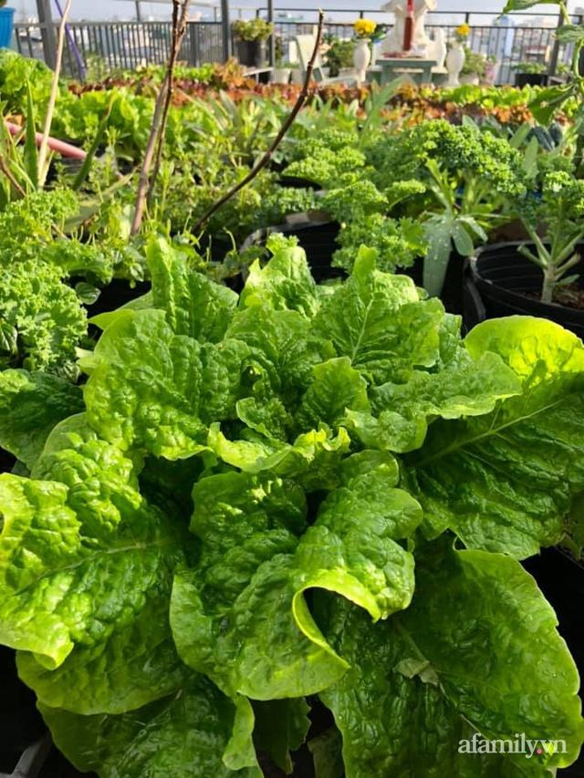 """Mẹ Đà Nẵng tạo ra """"nông trại"""" rau quả sạch trên tầng thượng giúp cả nhà vui khỏe trong những ngày giãn cách - Ảnh 26."""