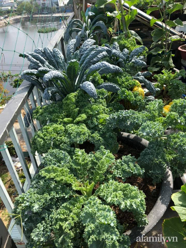 """Mẹ Đà Nẵng tạo ra """"nông trại"""" rau quả sạch trên tầng thượng giúp cả nhà vui khỏe trong những ngày giãn cách - Ảnh 27."""