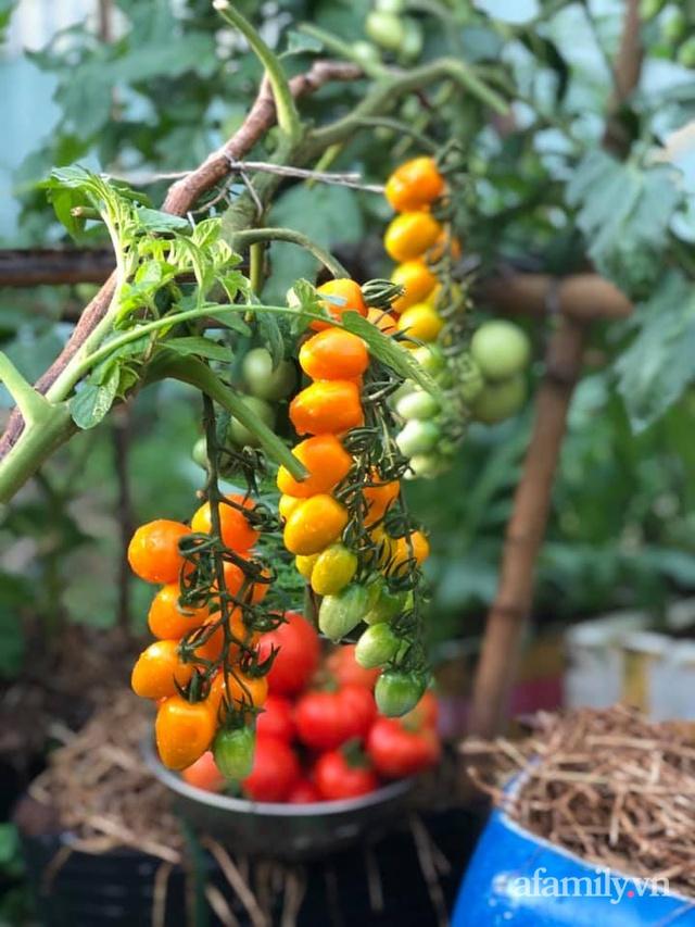 """Mẹ Đà Nẵng tạo ra """"nông trại"""" rau quả sạch trên tầng thượng giúp cả nhà vui khỏe trong những ngày giãn cách - Ảnh 4."""
