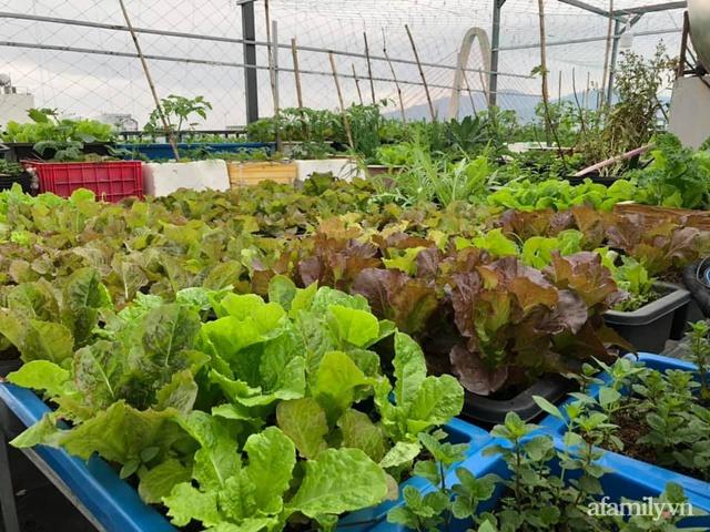 """Mẹ Đà Nẵng tạo ra """"nông trại"""" rau quả sạch trên tầng thượng giúp cả nhà vui khỏe trong những ngày giãn cách - Ảnh 6."""