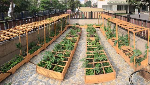 Cách thiết kế vườn rau sân thượng mùa dịch vừa đơn giản lại đẹp mắt  - Ảnh 7.