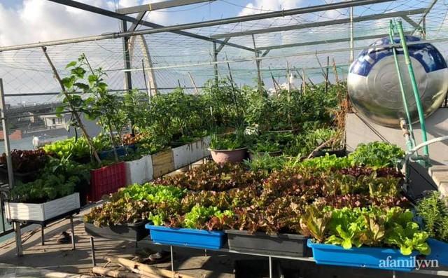 """Mẹ Đà Nẵng tạo ra """"nông trại"""" rau quả sạch trên tầng thượng giúp cả nhà vui khỏe trong những ngày giãn cách - Ảnh 8."""