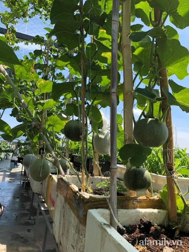 """Mẹ Đà Nẵng tạo ra """"nông trại"""" rau quả sạch trên tầng thượng giúp cả nhà vui khỏe trong những ngày giãn cách - Ảnh 9."""