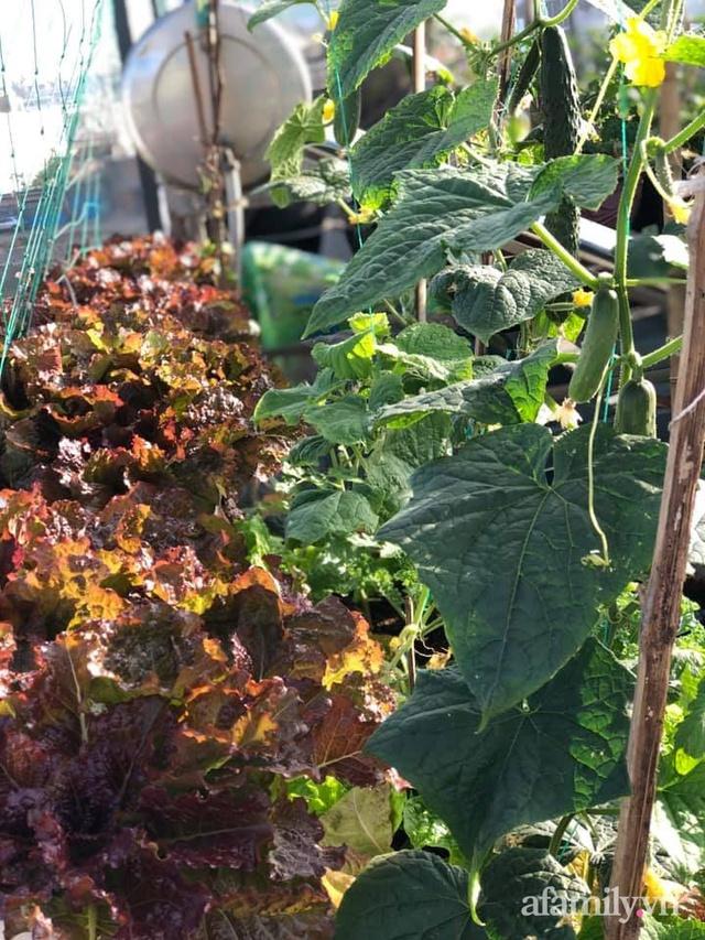 """Mẹ Đà Nẵng tạo ra """"nông trại"""" rau quả sạch trên tầng thượng giúp cả nhà vui khỏe trong những ngày giãn cách - Ảnh 10."""