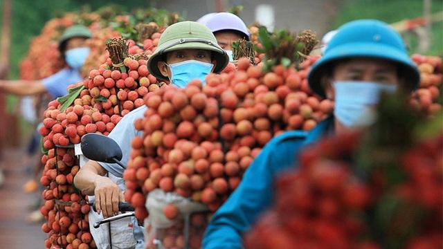 Từ câu mỗi người Việt ăn vài lạng vải đến kỳ tích tiêu thụ vải thiều nội địa vượt xuất khẩu ngay giữa đại dịch - Ảnh 2.