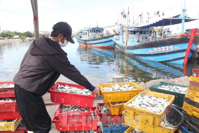 Cảng cá lớn nhất miền Trung ra sao trước giờ đóng cửa? - Ảnh 3.