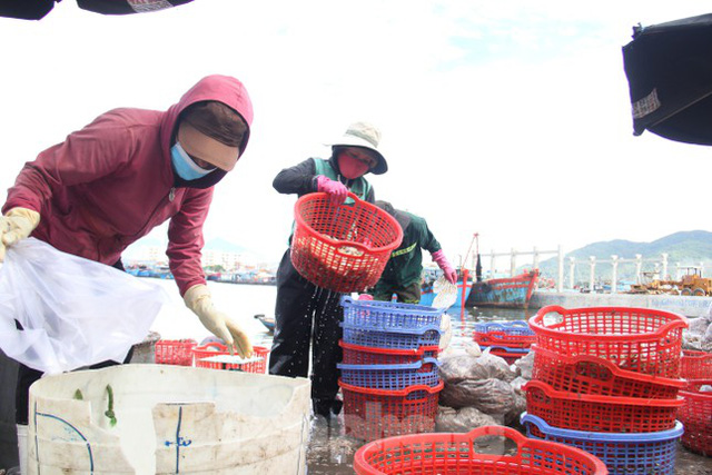 Cảng cá lớn nhất miền Trung ra sao trước giờ đóng cửa? - Ảnh 4.
