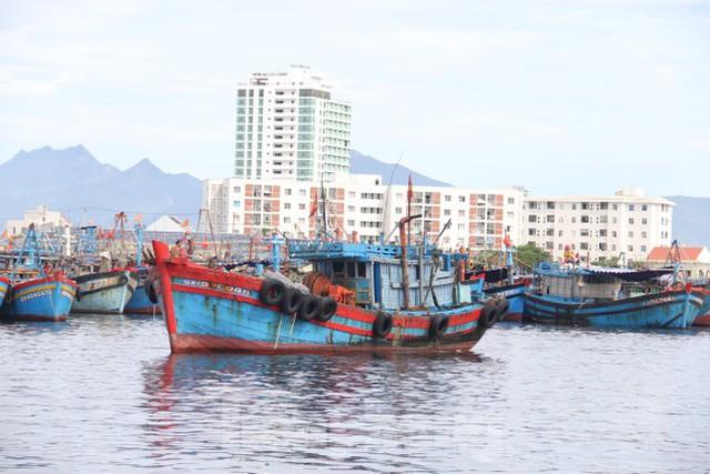 Cảng cá lớn nhất miền Trung ra sao trước giờ đóng cửa? - Ảnh 8.