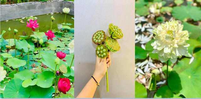 """Khu vườn """"copy Lý Tử Thất"""" rộng 2.500m2 ở Bạc Liêu: Vườn rau, ao cá, sum sê cây trái và nhiều góc sống ảo, ai nhìn cũng mê - Ảnh 7."""