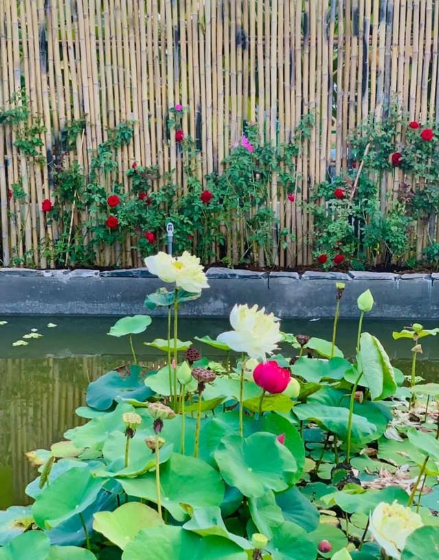 """Khu vườn """"copy Lý Tử Thất"""" rộng 2.500m2 ở Bạc Liêu: Vườn rau, ao cá, sum sê cây trái và nhiều góc sống ảo, ai nhìn cũng mê - Ảnh 5."""