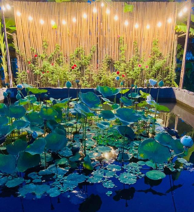 """Khu vườn """"copy Lý Tử Thất"""" rộng 2.500m2 ở Bạc Liêu: Vườn rau, ao cá, sum sê cây trái và nhiều góc sống ảo, ai nhìn cũng mê - Ảnh 6."""