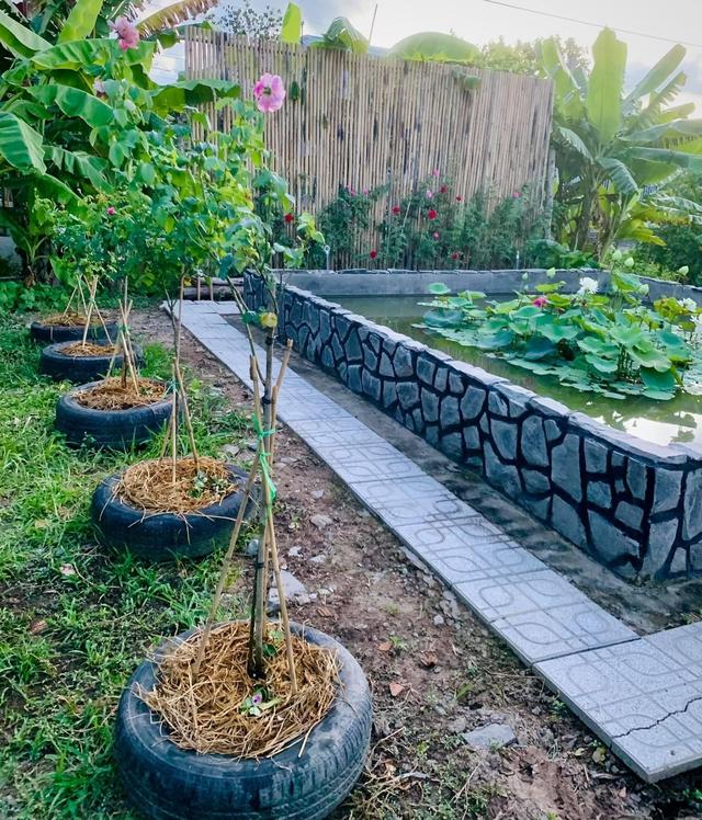 """Khu vườn """"copy Lý Tử Thất"""" rộng 2.500m2 ở Bạc Liêu: Vườn rau, ao cá, sum sê cây trái và nhiều góc sống ảo, ai nhìn cũng mê - Ảnh 9."""