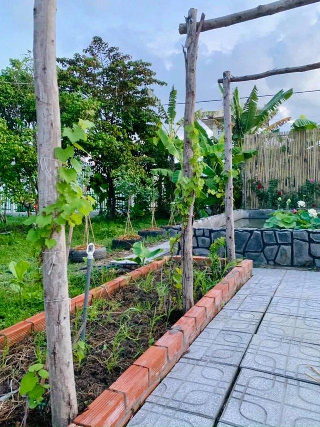 """Khu vườn """"copy Lý Tử Thất"""" rộng 2.500m2 ở Bạc Liêu: Vườn rau, ao cá, sum sê cây trái và nhiều góc sống ảo, ai nhìn cũng mê - Ảnh 15."""