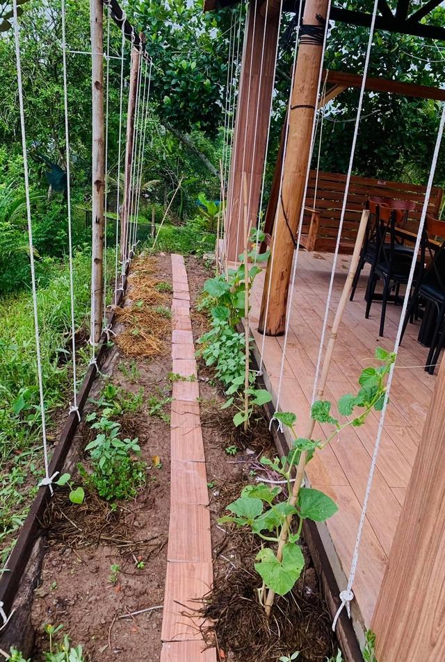 """Khu vườn """"copy Lý Tử Thất"""" rộng 2.500m2 ở Bạc Liêu: Vườn rau, ao cá, sum sê cây trái và nhiều góc sống ảo, ai nhìn cũng mê - Ảnh 16."""