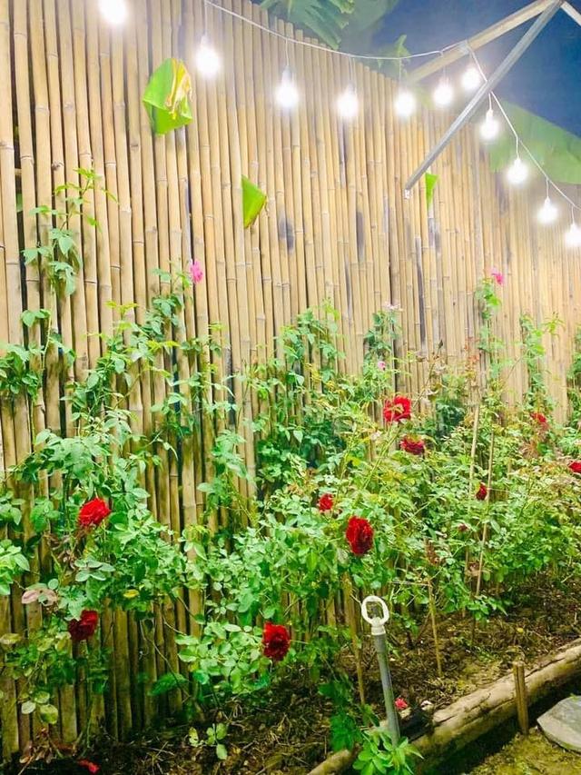 """Khu vườn """"copy Lý Tử Thất"""" rộng 2.500m2 ở Bạc Liêu: Vườn rau, ao cá, sum sê cây trái và nhiều góc sống ảo, ai nhìn cũng mê - Ảnh 4."""