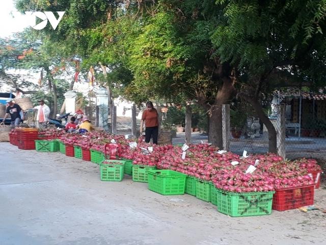 Bình Thuận tìm đầu ra cho trái thanh long - Ảnh 2.