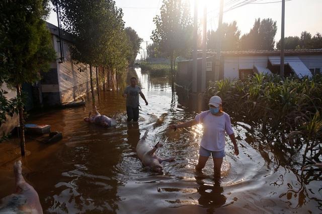 Nguồn sống bị mưa lũ nuốt chửng, người nông dân TQ tuyệt vọng cùng cực: Bầu trời như sụp đổ! - Ảnh 5.