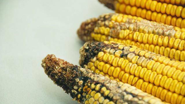 Loại gạo có khả năng gây ung thư cao bậc nhất, WHO đã cảnh báo từ lâu nhưng nhiều gia đình vẫn cố tiêu thụ - Ảnh 4.