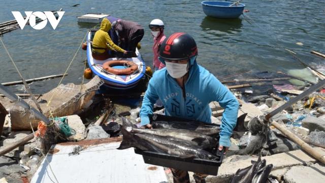 Gần 140 tấn hải sản nuôi lồng bè tại Đà Nẵng cần được hỗ trợ tiêu thụ - Ảnh 1.