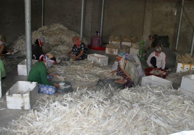Trung Quốc mua gần 20 triệu USD lông gà, lông vịt của Việt Nam để làm gì? - Ảnh 1.